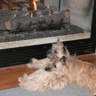 Keeping warm by the fire